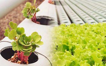 Horta hidropônica real food